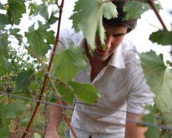 Thomas Stadler im Weingarten