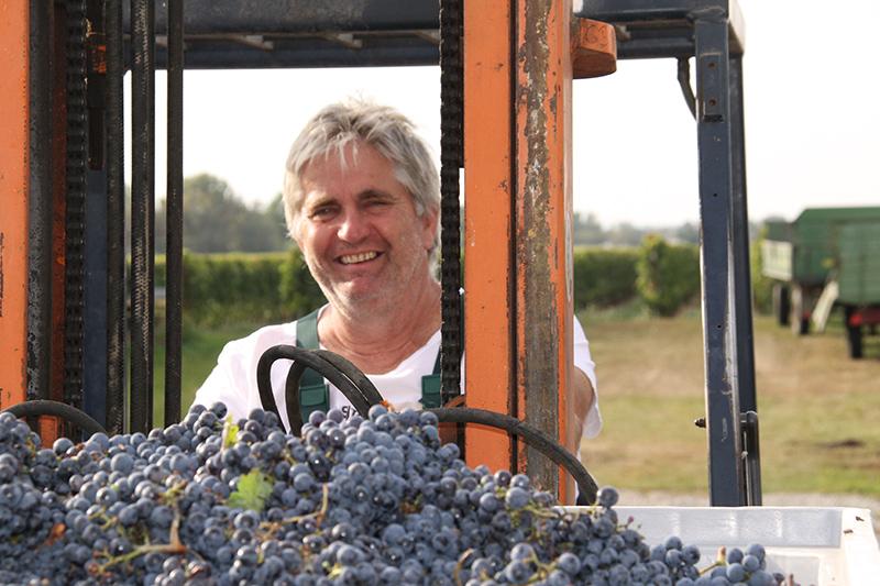 Josef Stadler bei der Weinlese